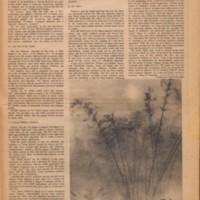 Newspaper_011_013 copy.jpg